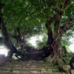 Escaleras hacia la puerta (gopura)