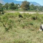 Viti Levu rural