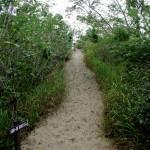 03 Sigatoka 041 Sand Dunes National Park 18